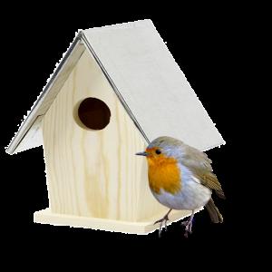 Insectes et Oiseaux